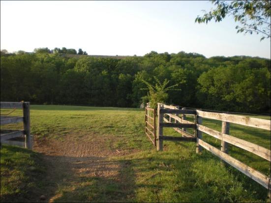 mares-pasture-6-5-11